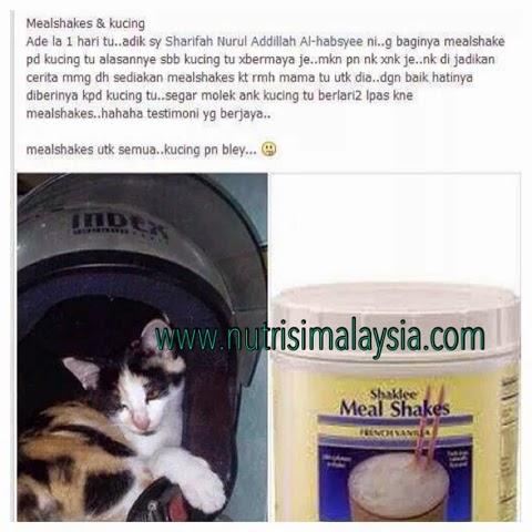 makanan untuk kucing