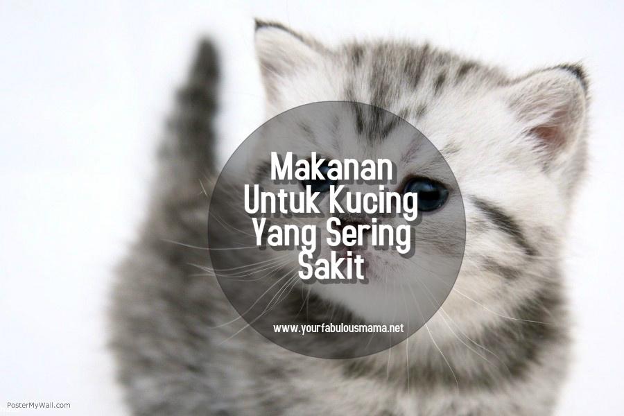 makanan untuk kucing yang sakit