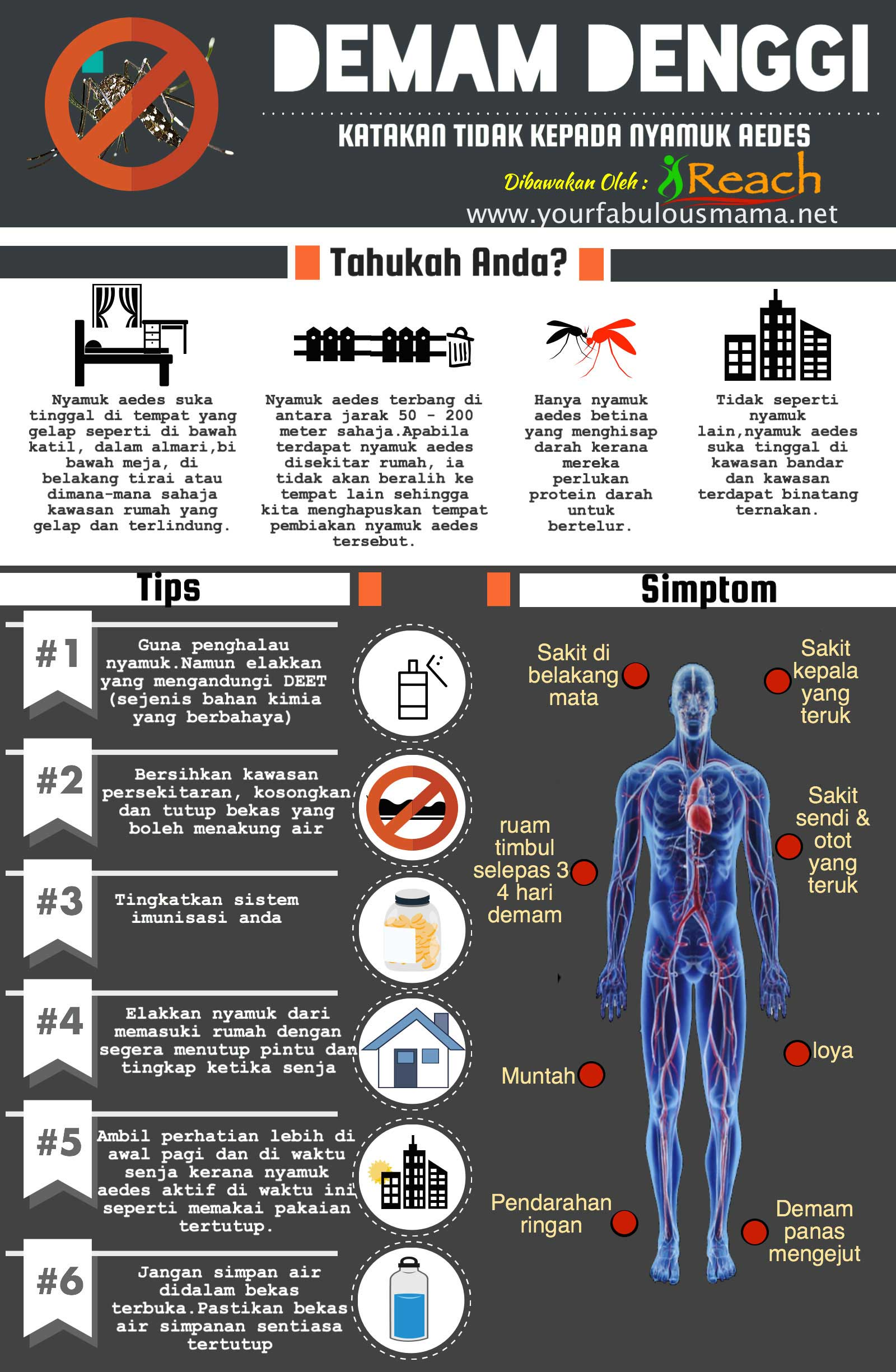 Infografik Cara Cegah Demam Denggi