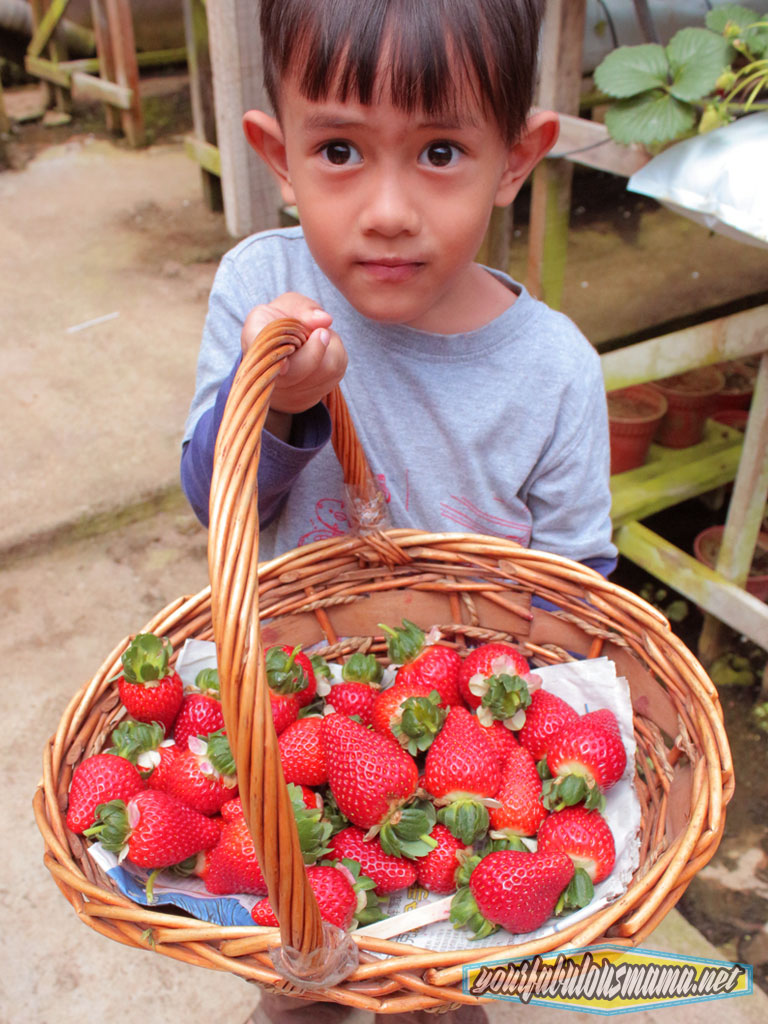 strawberi-basket