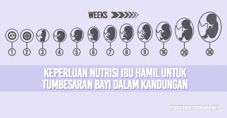 Nutrisi Untuk Bayi Dalam Kandungan Bagi Keperluan Proses Tumbesaran Sempurna