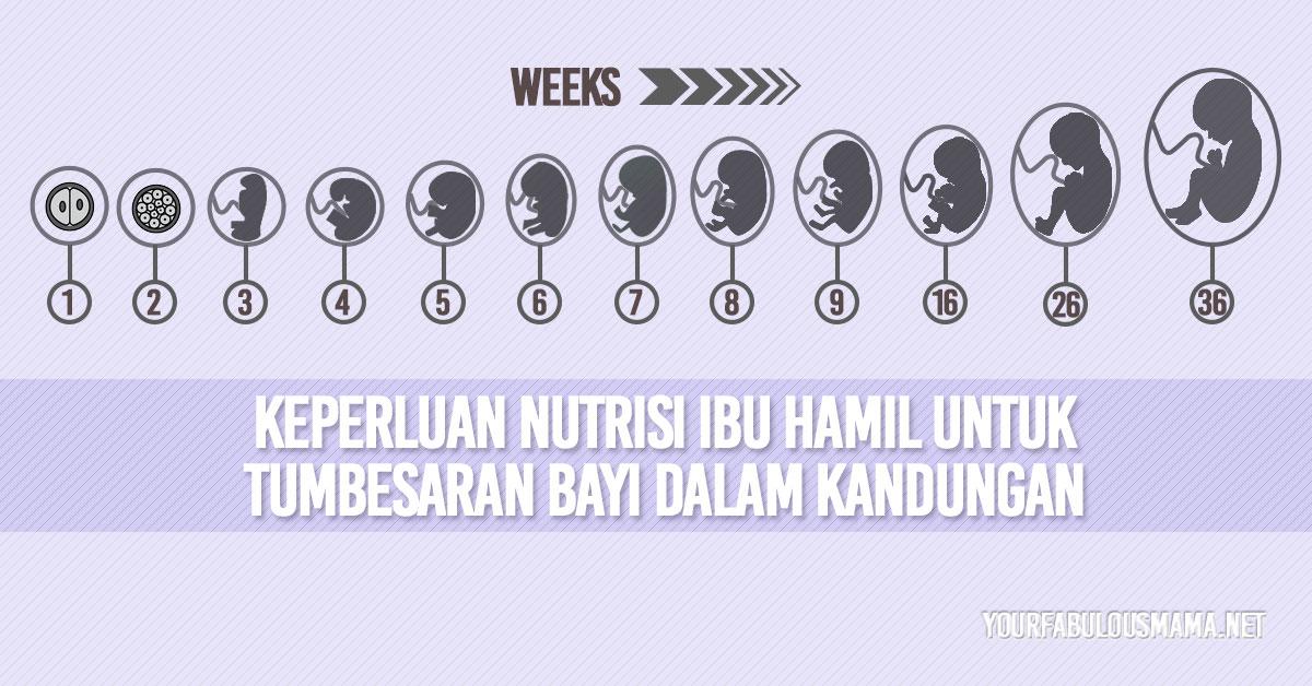 Nutrisi Bayi Dalam Kandungan