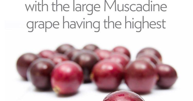 Kelebihan Anggur Muscadine Yang Ramai Tak Tahu