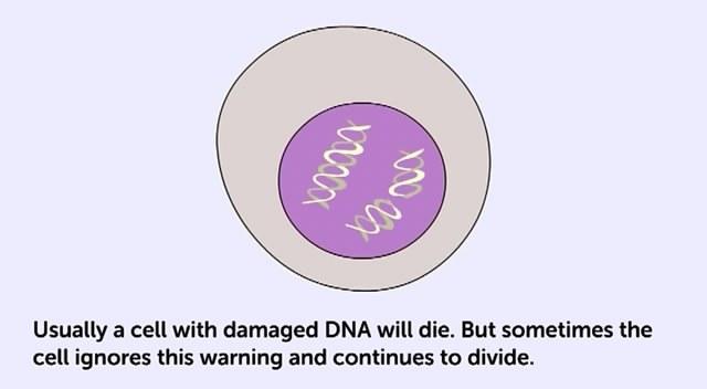 kerosakan sel berterusan