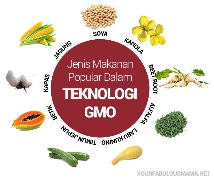 Makanan Sumber GMO