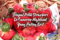 Tempat Petik Strawberi Di Cameron Highland Yang Paling Best