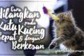 Cara Menghilangkan Kutu Kucing Dengan Cepat dan Sangat Berkesan